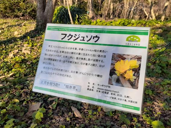 f:id:tokotokoarukuyo:20210201200616p:plain