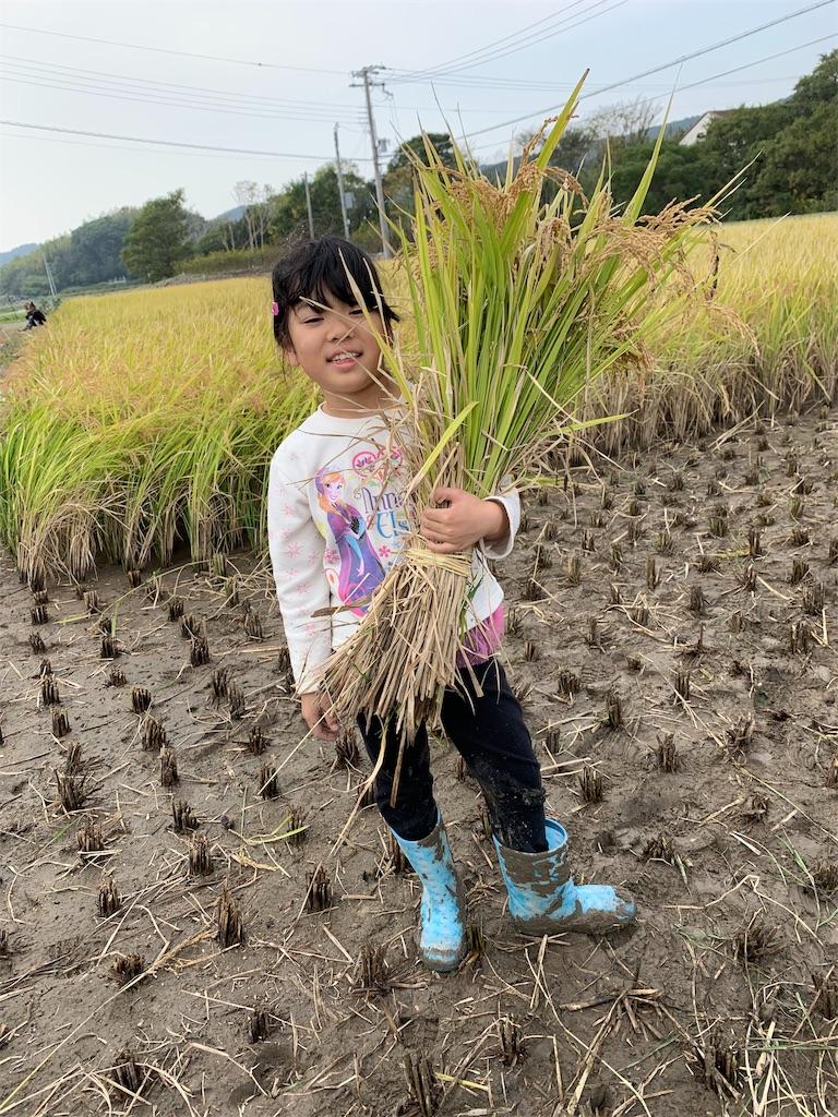 f:id:tokutokutokkunkun:20191114115140j:image