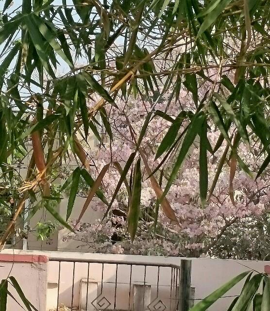f:id:tokyo-bangalore:20170329205439j:image