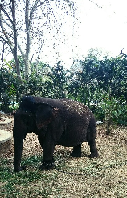 f:id:tokyo-bangalore:20170403184410j:image
