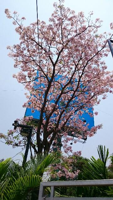 f:id:tokyo-bangalore:20170415224837j:image
