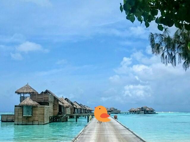f:id:tokyo-bangalore:20170429010233j:image