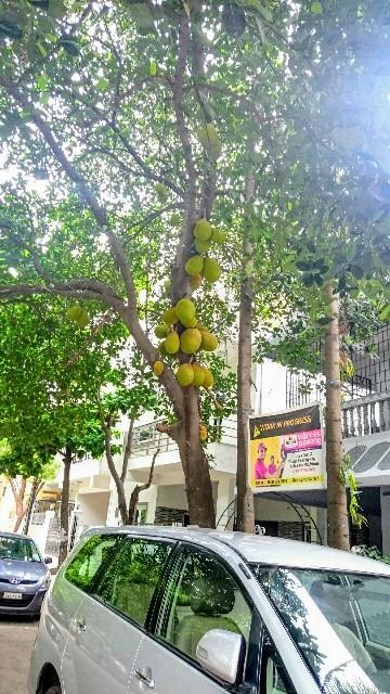 f:id:tokyo-bangalore:20170608174923j:image