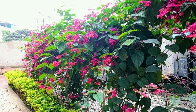 f:id:tokyo-bangalore:20170824214226j:image