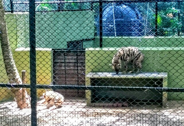 f:id:tokyo-bangalore:20170907002452j:image