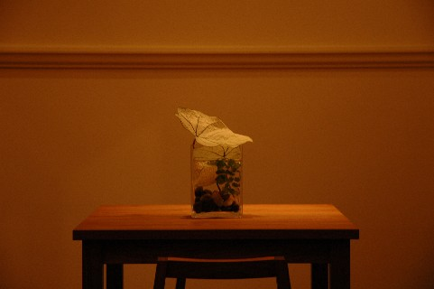 f:id:tokyo-ujikintoki:20110619125630j:image