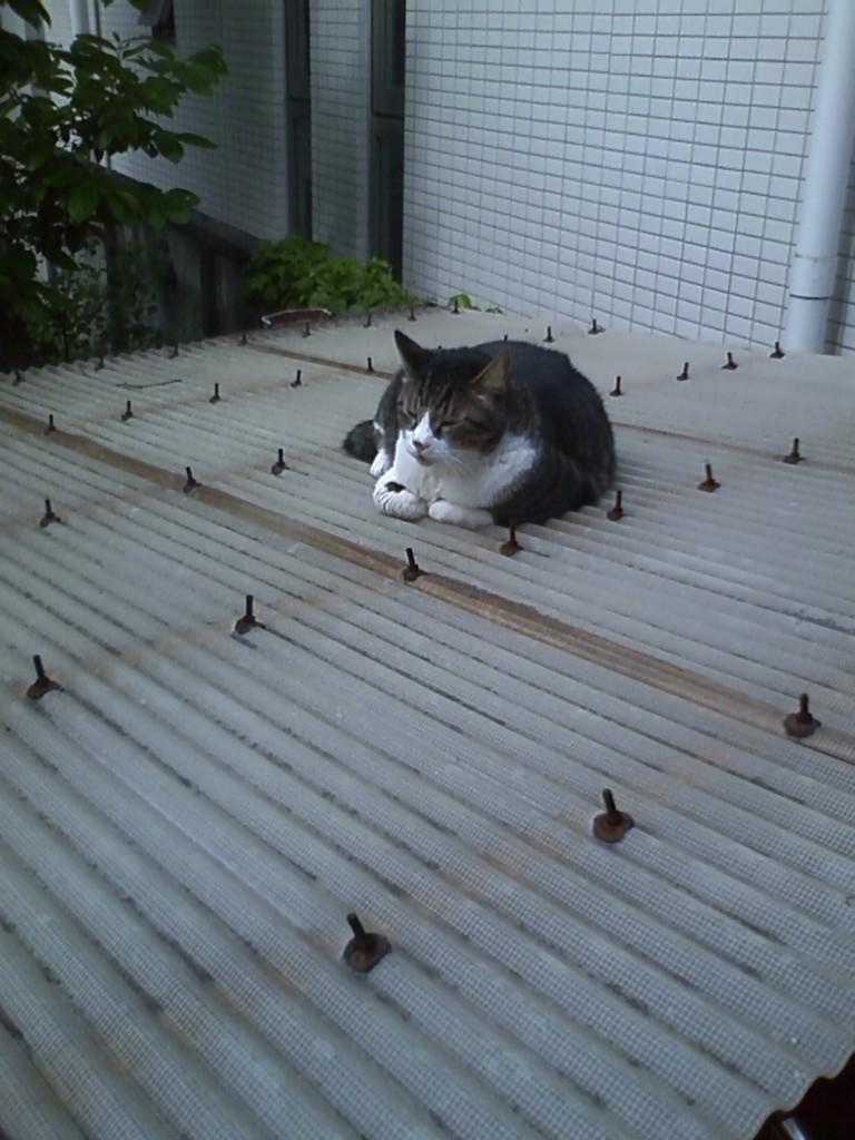f:id:tokyo_sotai:20100513150427j:plain