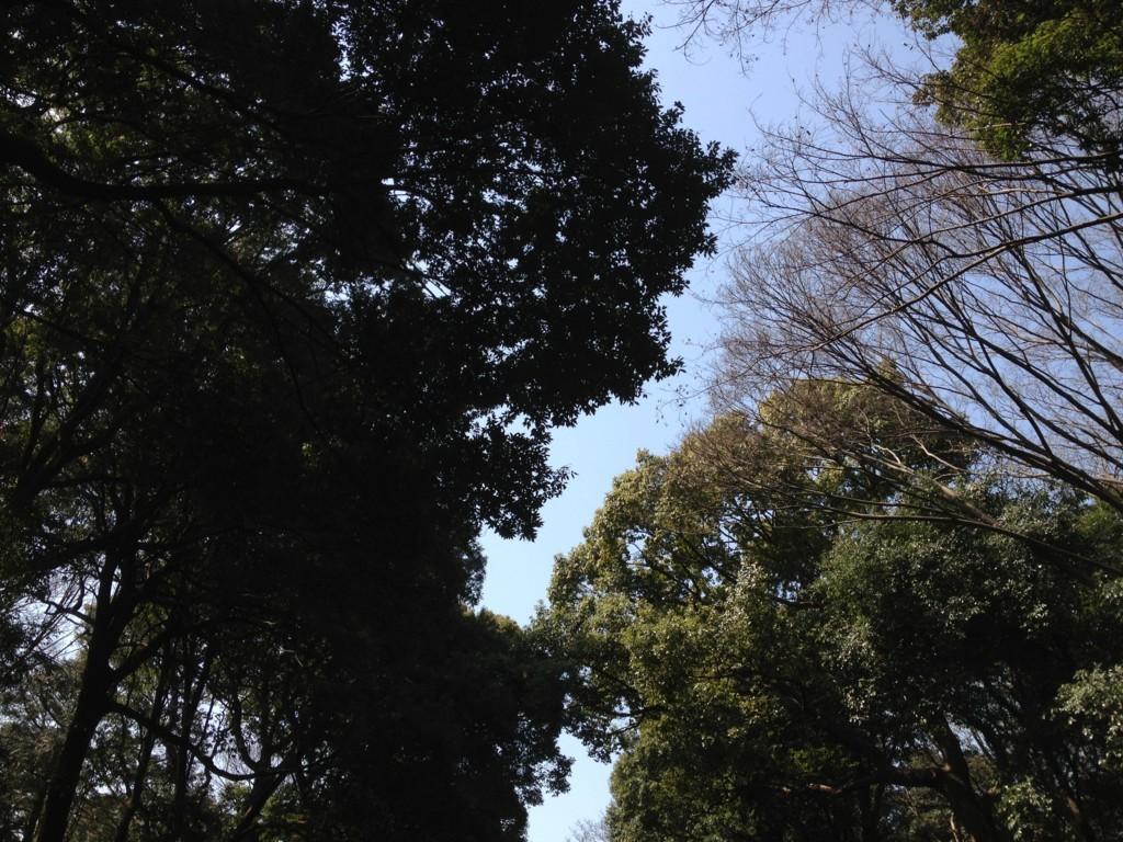 f:id:tokyo_sotai:20180314120233j:plain