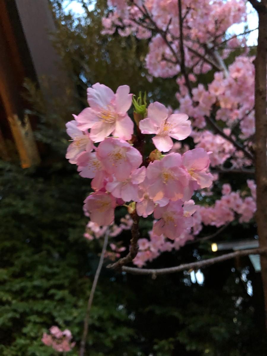 f:id:tokyo_sotai:20190313175334j:plain