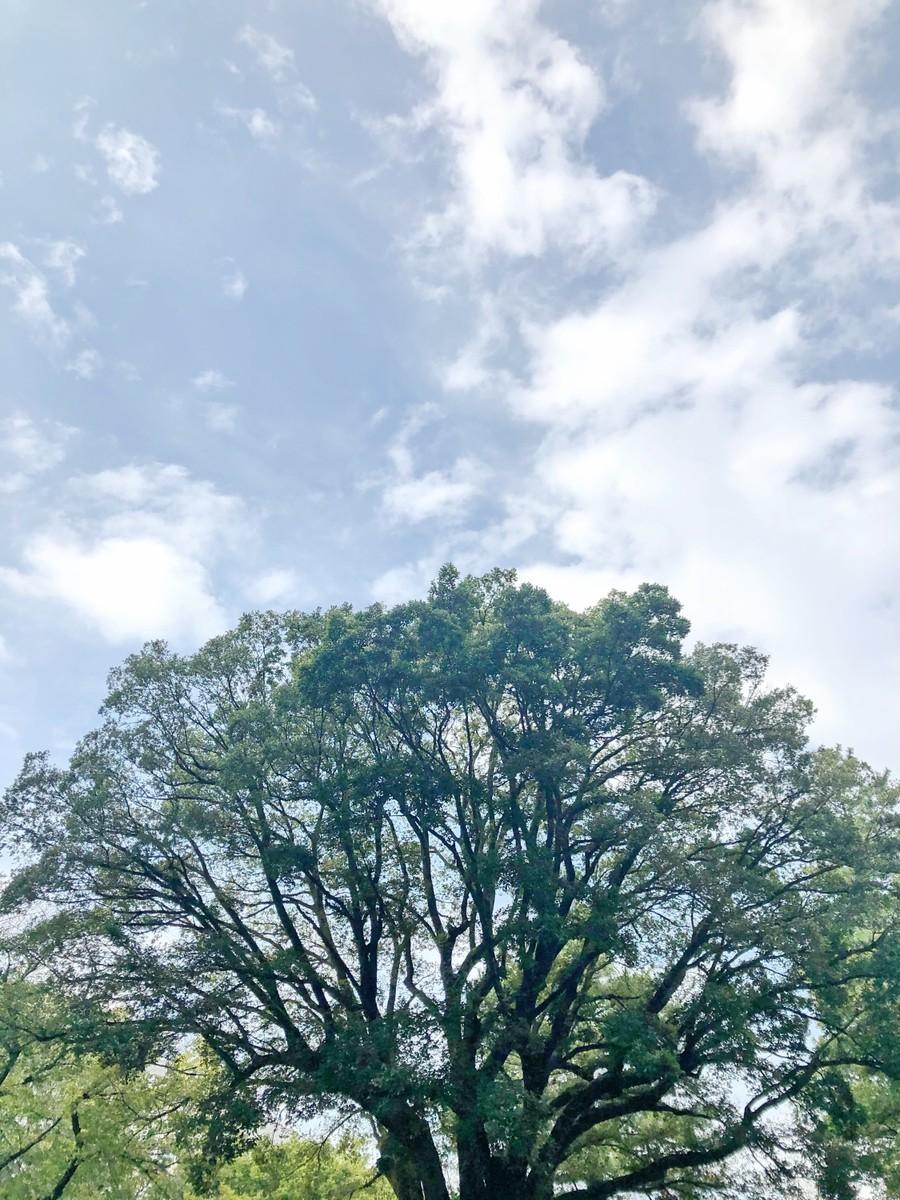 f:id:tokyo_sotai:20201005134914j:plain