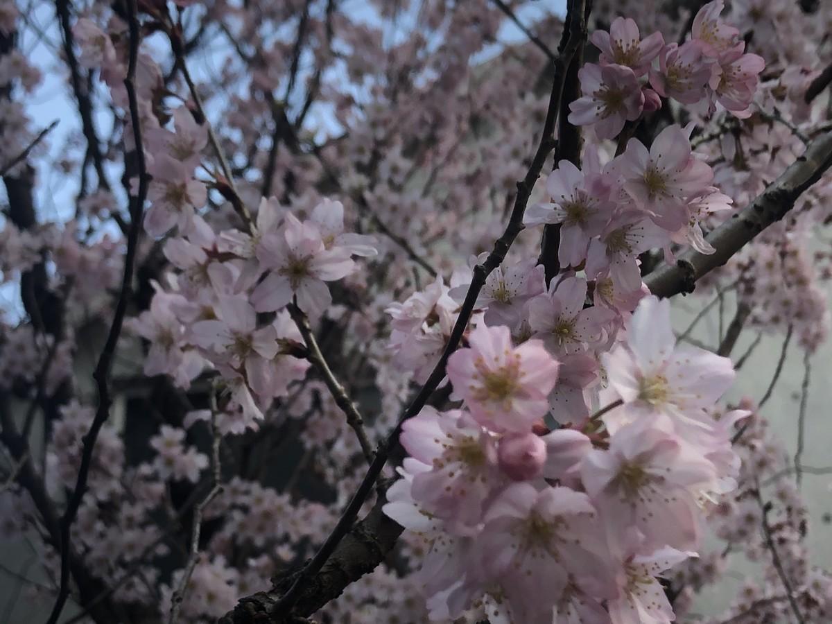 f:id:tokyo_sotai:20210310152221j:plain