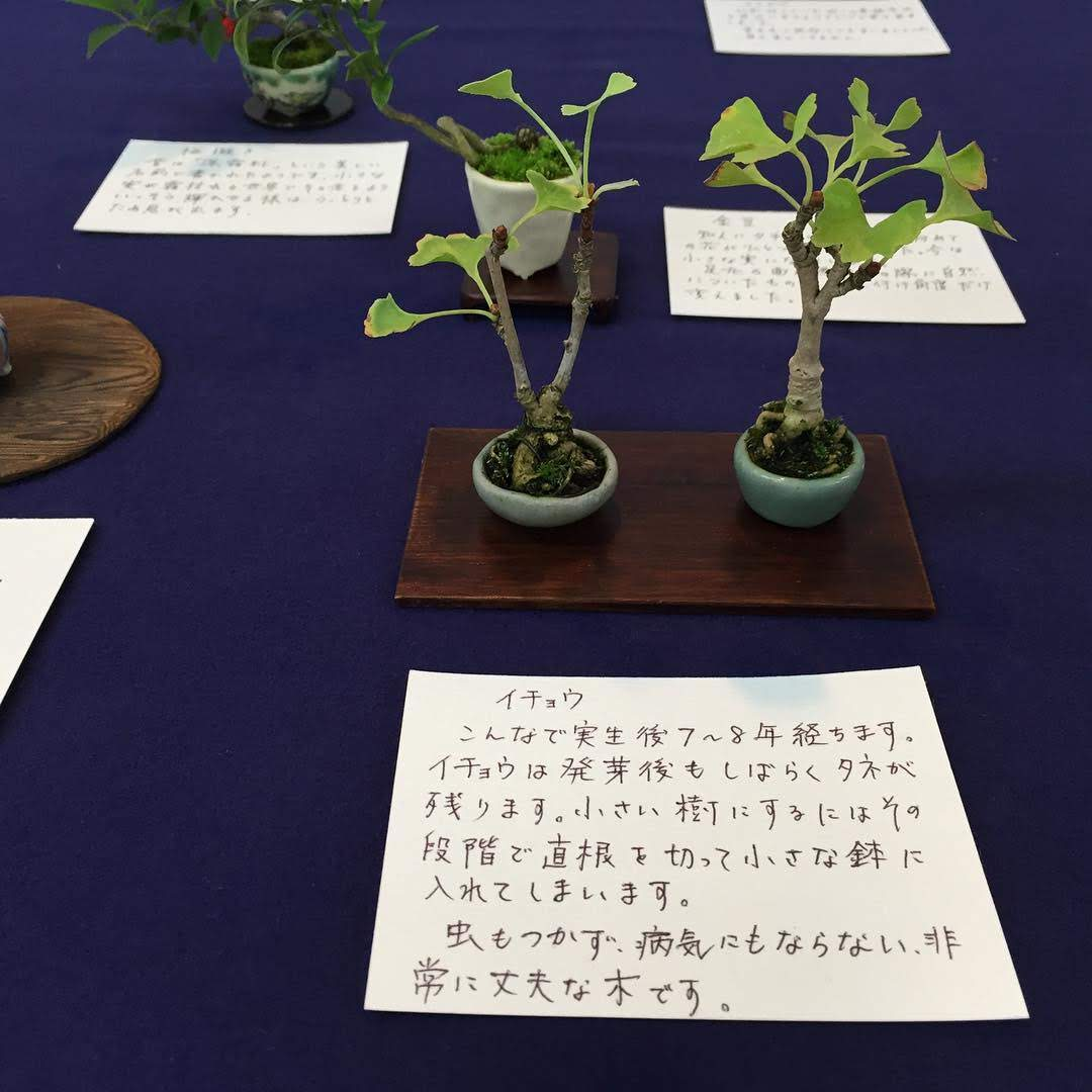 f:id:tokyobonsai:20210410192121j:plain