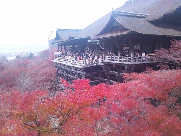 f:id:tokyocat:20151229114535j:image
