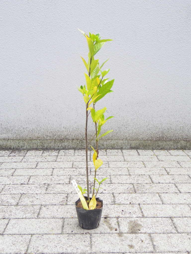 f:id:tokyoikimono:20170506140826j:plain