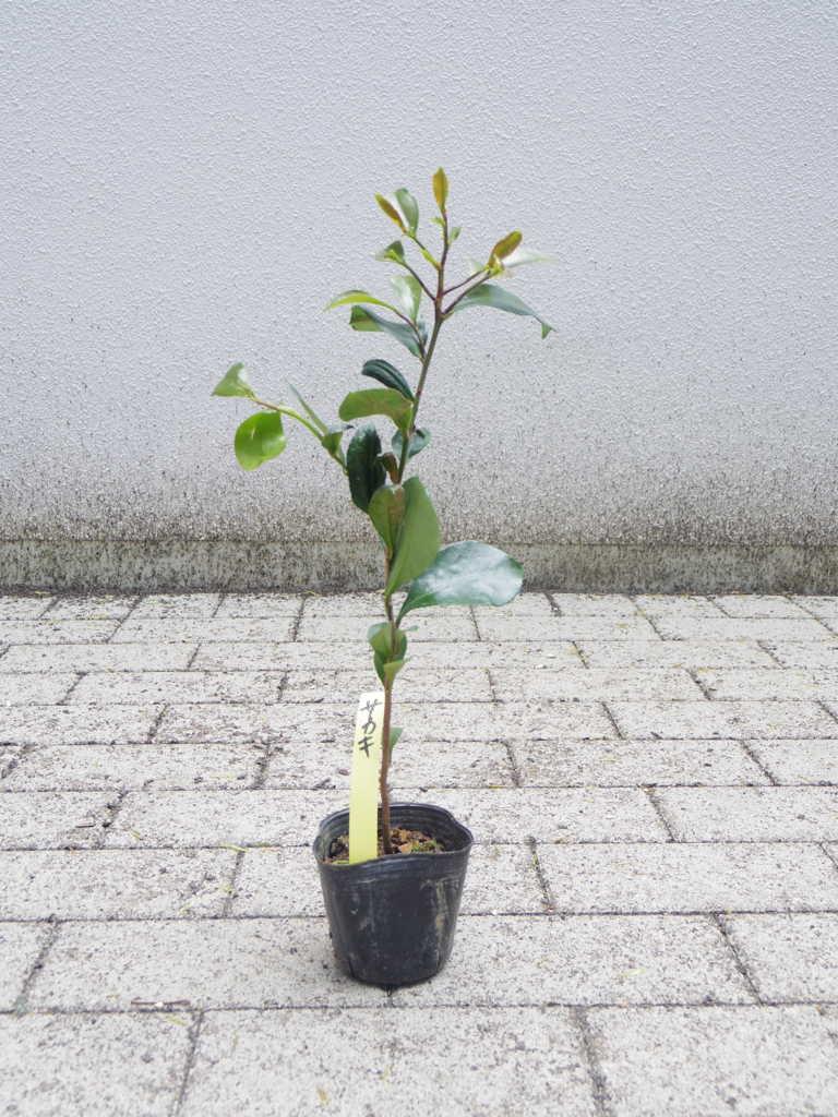 f:id:tokyoikimono:20170506140924j:plain