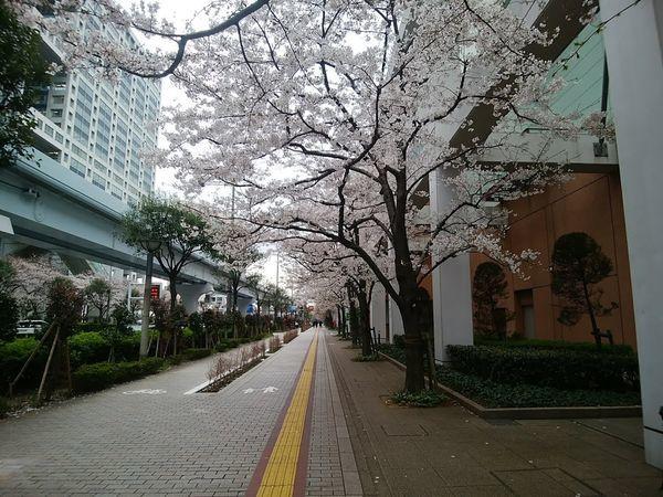 f:id:tokyojun:20190401163819j:plain