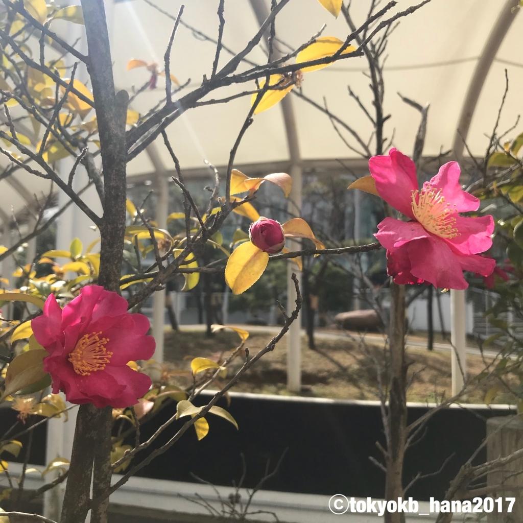 f:id:tokyokb_hana2017:20180305110815j:plain