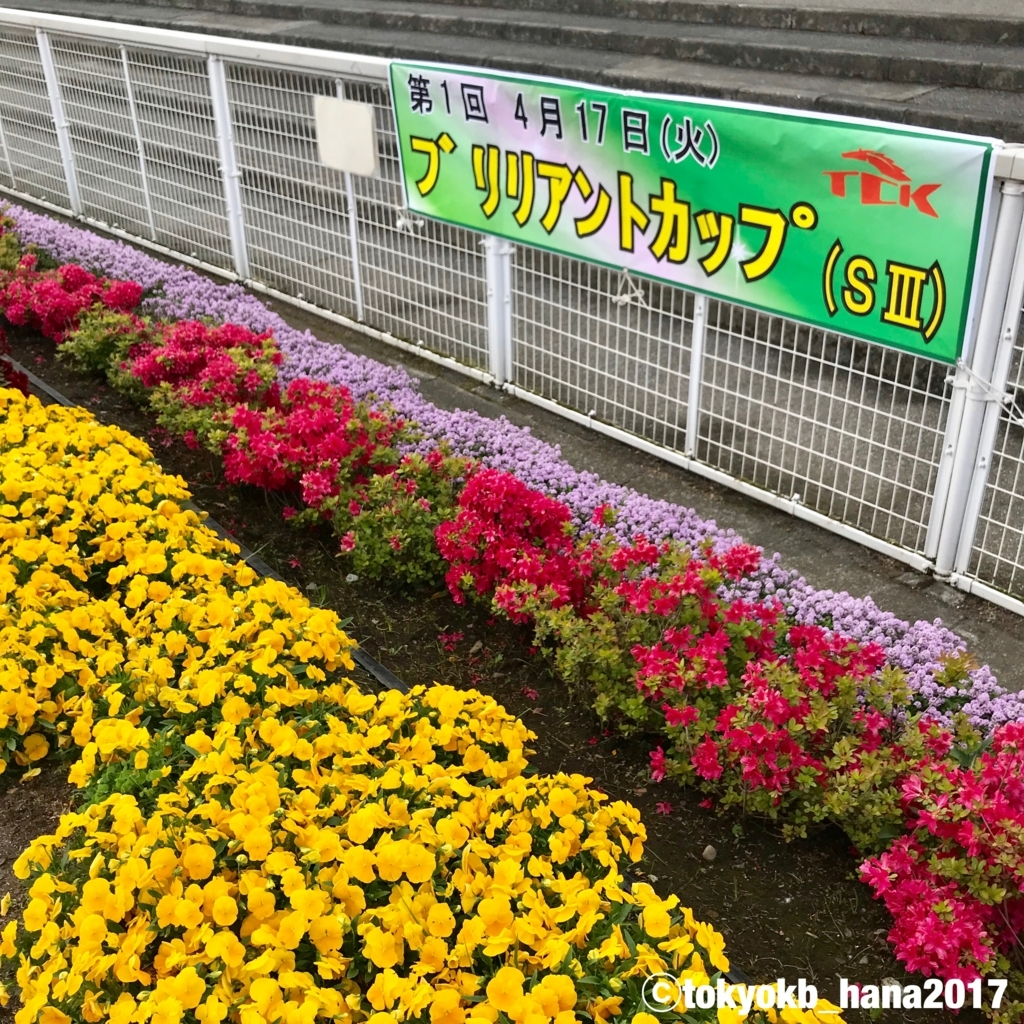 f:id:tokyokb_hana2017:20180416160108j:plain