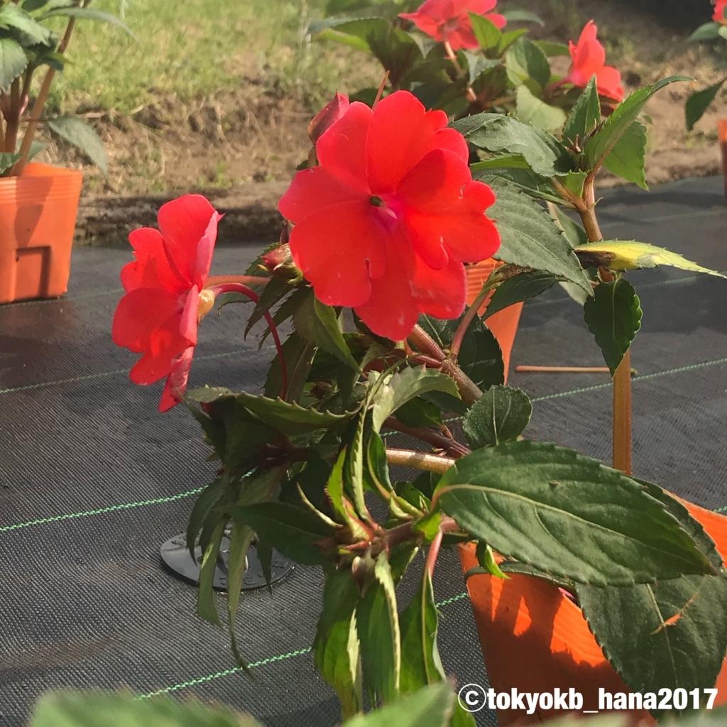 f:id:tokyokb_hana2017:20180519172310j:plain