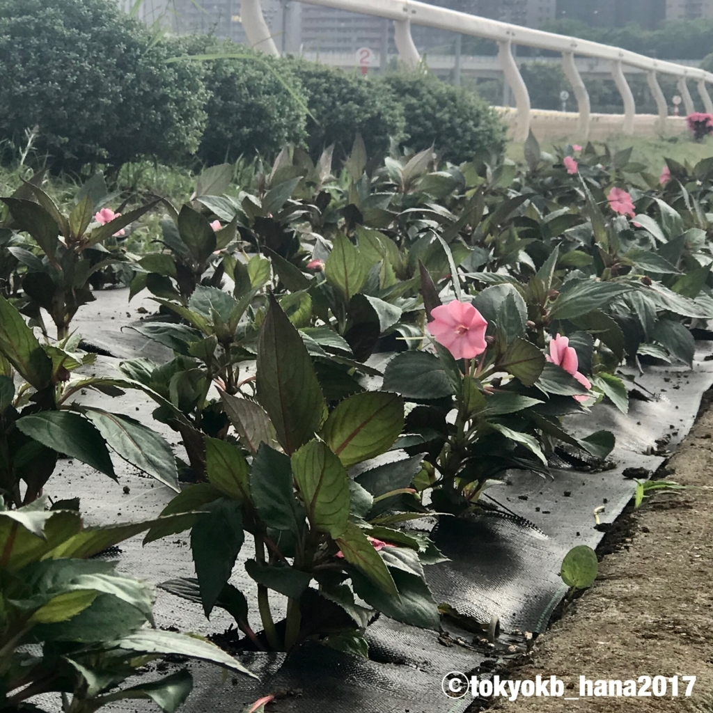 f:id:tokyokb_hana2017:20180519172601j:plain