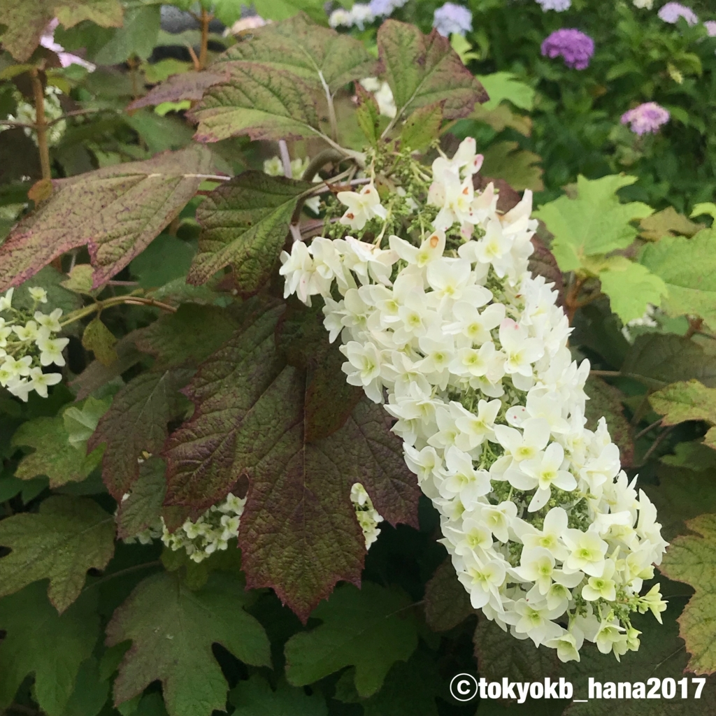 f:id:tokyokb_hana2017:20180620144651j:plain