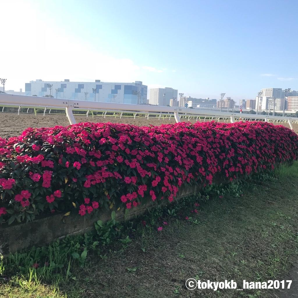 f:id:tokyokb_hana2017:20181110100031j:plain