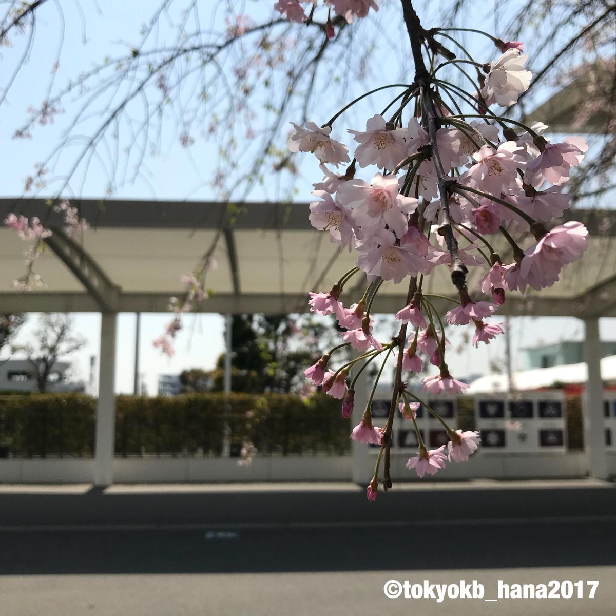 f:id:tokyokb_hana2017:20190406130506j:plain