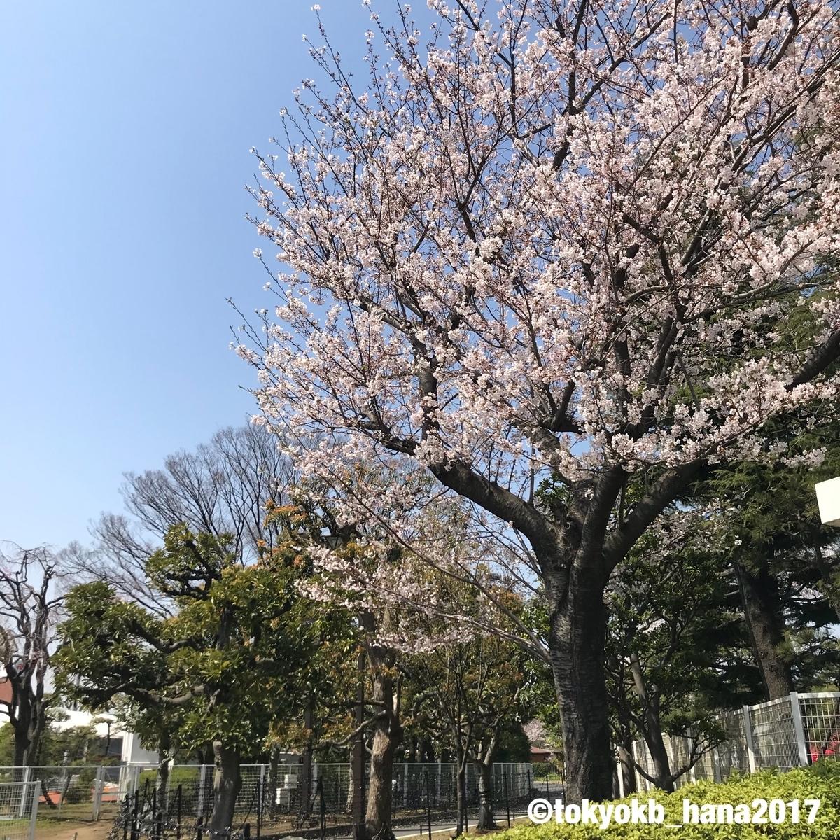f:id:tokyokb_hana2017:20190406152841j:plain