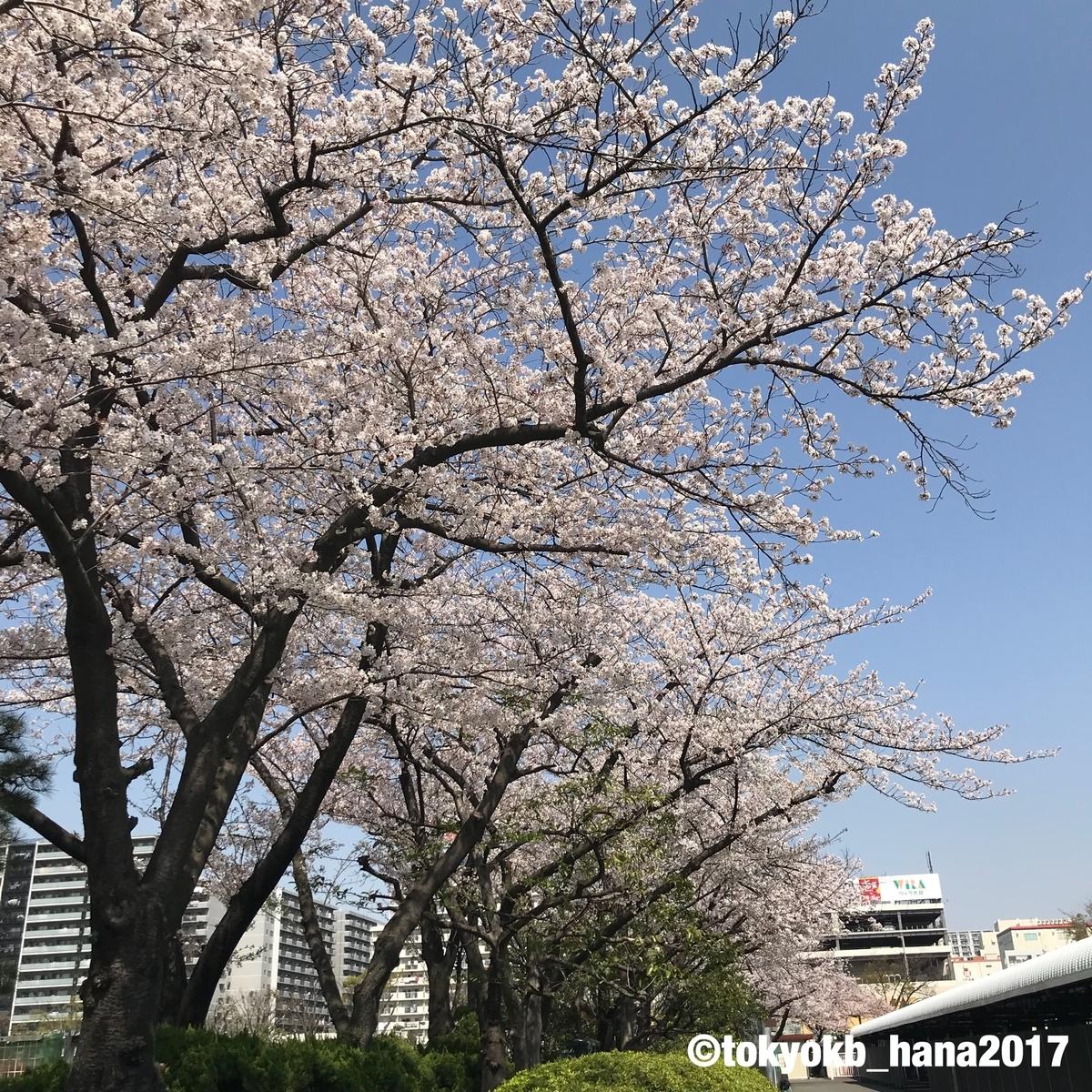 f:id:tokyokb_hana2017:20190406152918j:plain