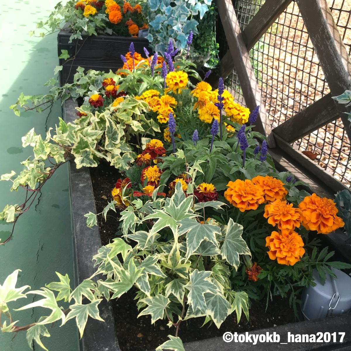 f:id:tokyokb_hana2017:20190506133326j:plain