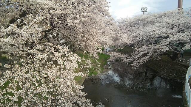 f:id:tokyokenji:20170407220814j:image