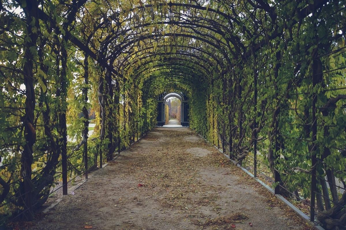 葉っぱのついたトンネル