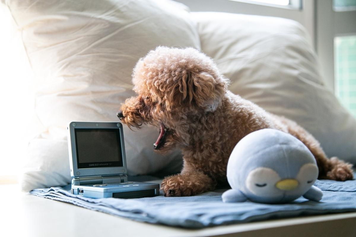 パソコンに見立てたゲーム機にプードルが口を開けている