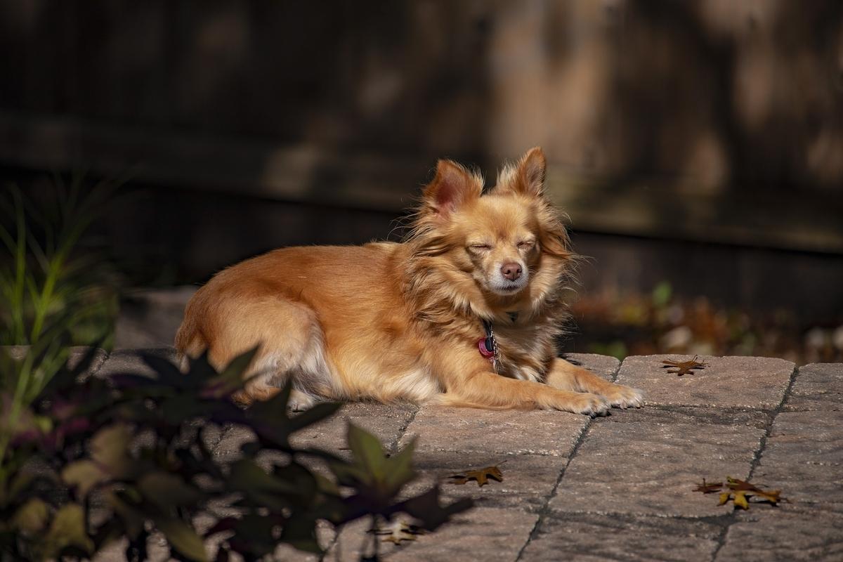 目を閉じている犬