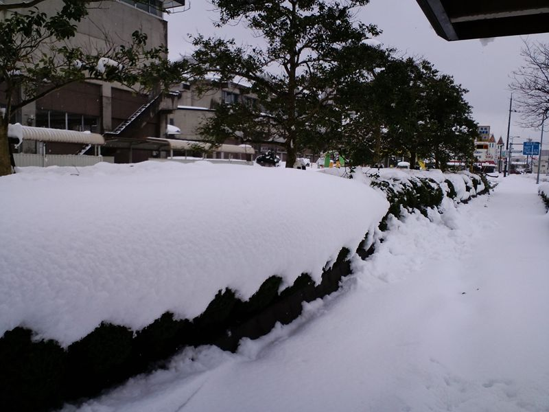 f:id:tokyotsubamezhenjiu:20170107154950j:plain