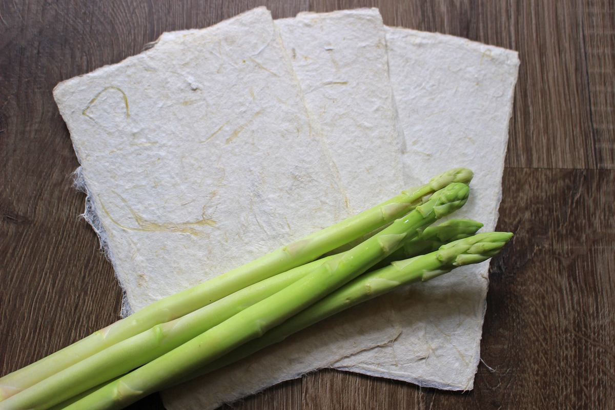 野菜和紙誕生!<アスパラガス和紙>