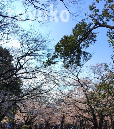 f:id:tokyoyokohama:20170403215457j:plain