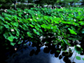 京都 嵐山 天龍寺