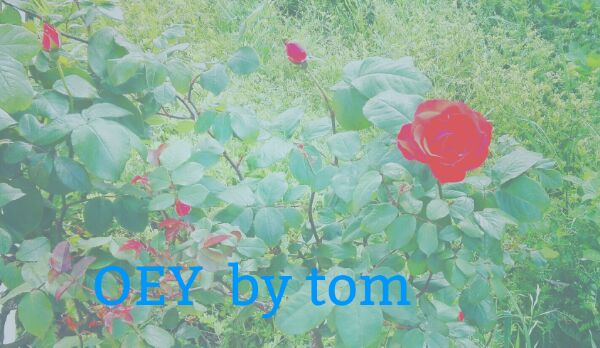 f:id:tom-oey:20200908171709j:plain