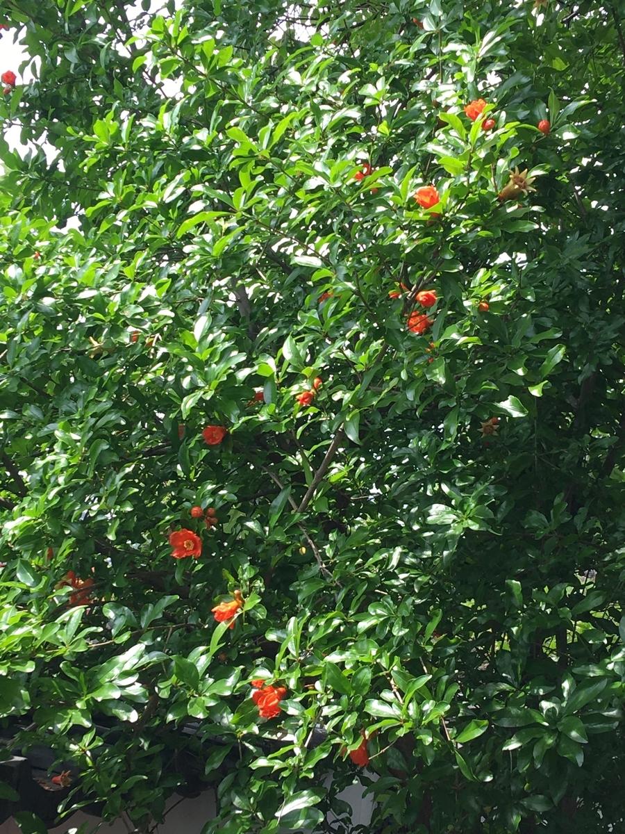 f:id:tomaatlas:20200613190412j:plain