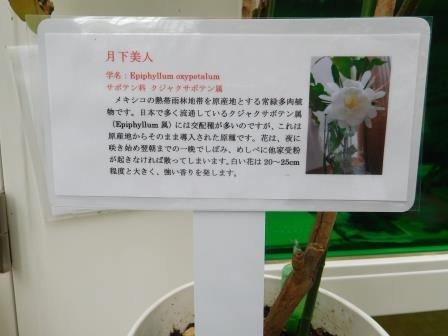f:id:tomakomai-library:20170818101448j:plain