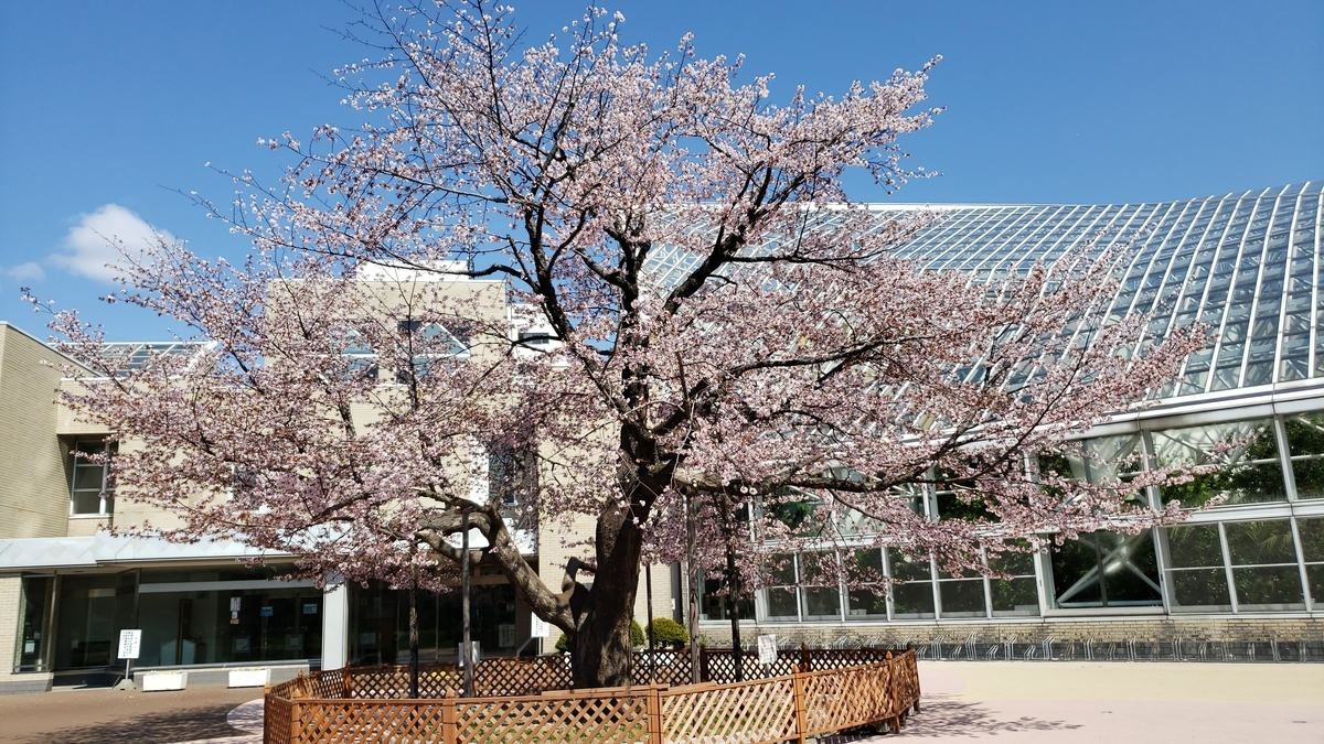 f:id:tomakomai-library:20190512101130j:plain