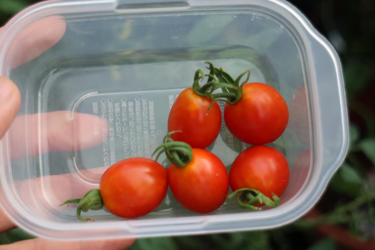 f:id:tomato_1:20200914031420j:plain