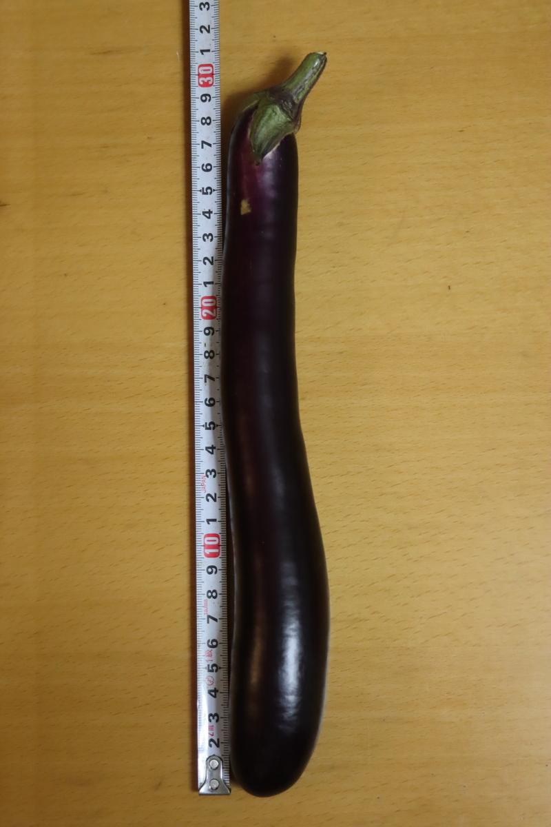 f:id:tomato_1:20200914035255j:plain