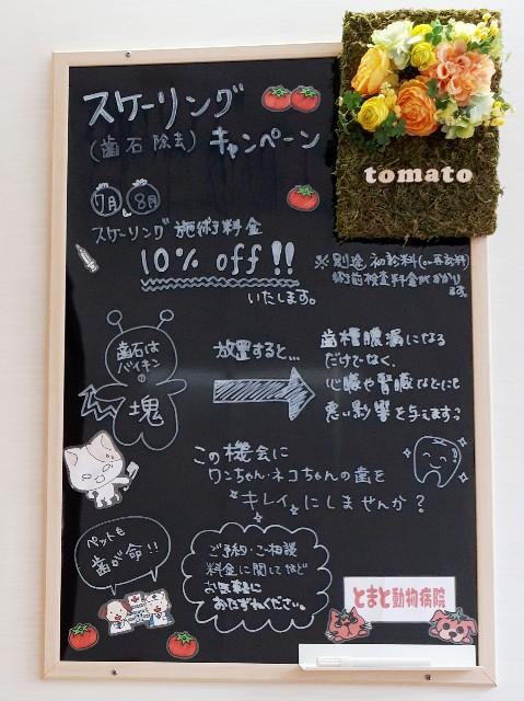 f:id:tomatoah:20190708173423j:image