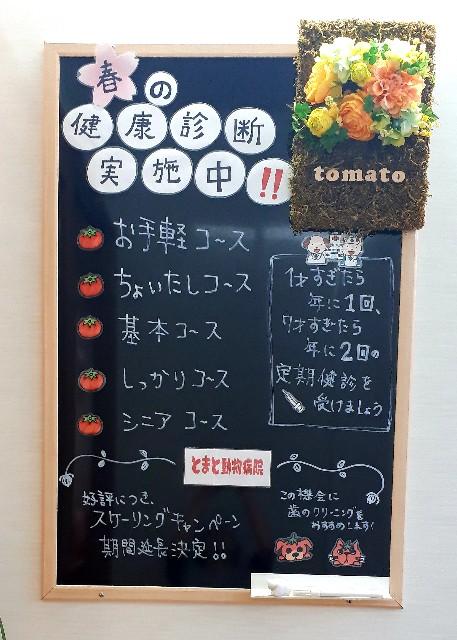 f:id:tomatoah:20200402125720j:image