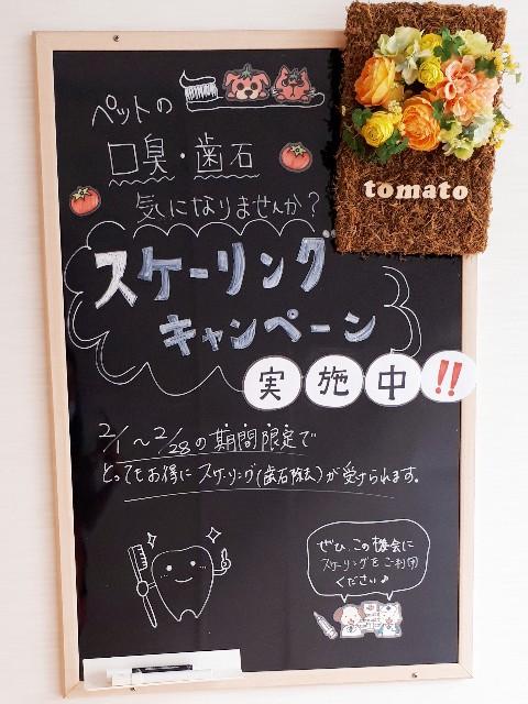 f:id:tomatoah:20210203101024j:image