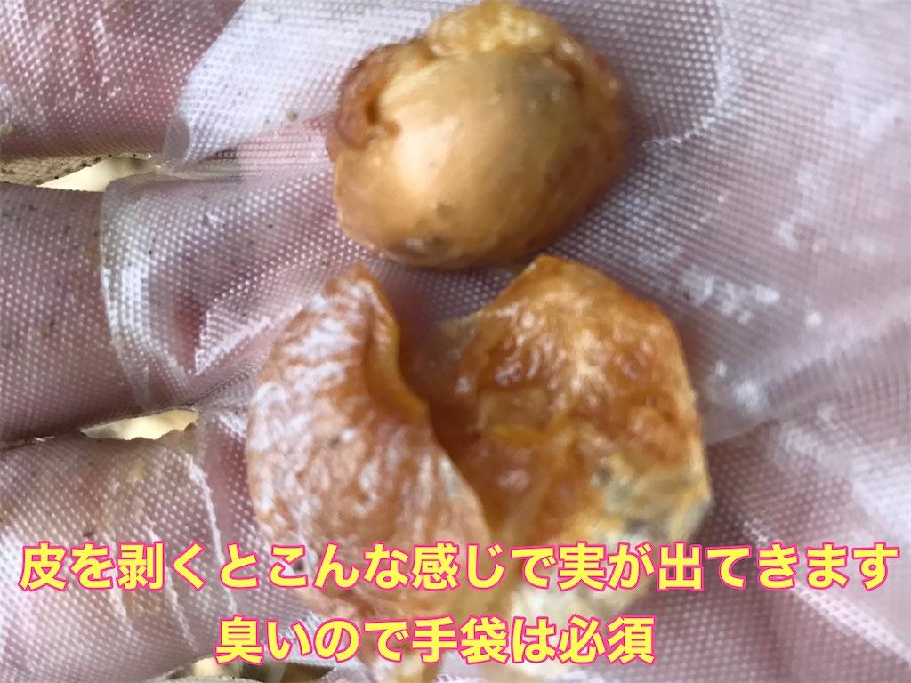 f:id:tomatoma24:20210124125551j:image