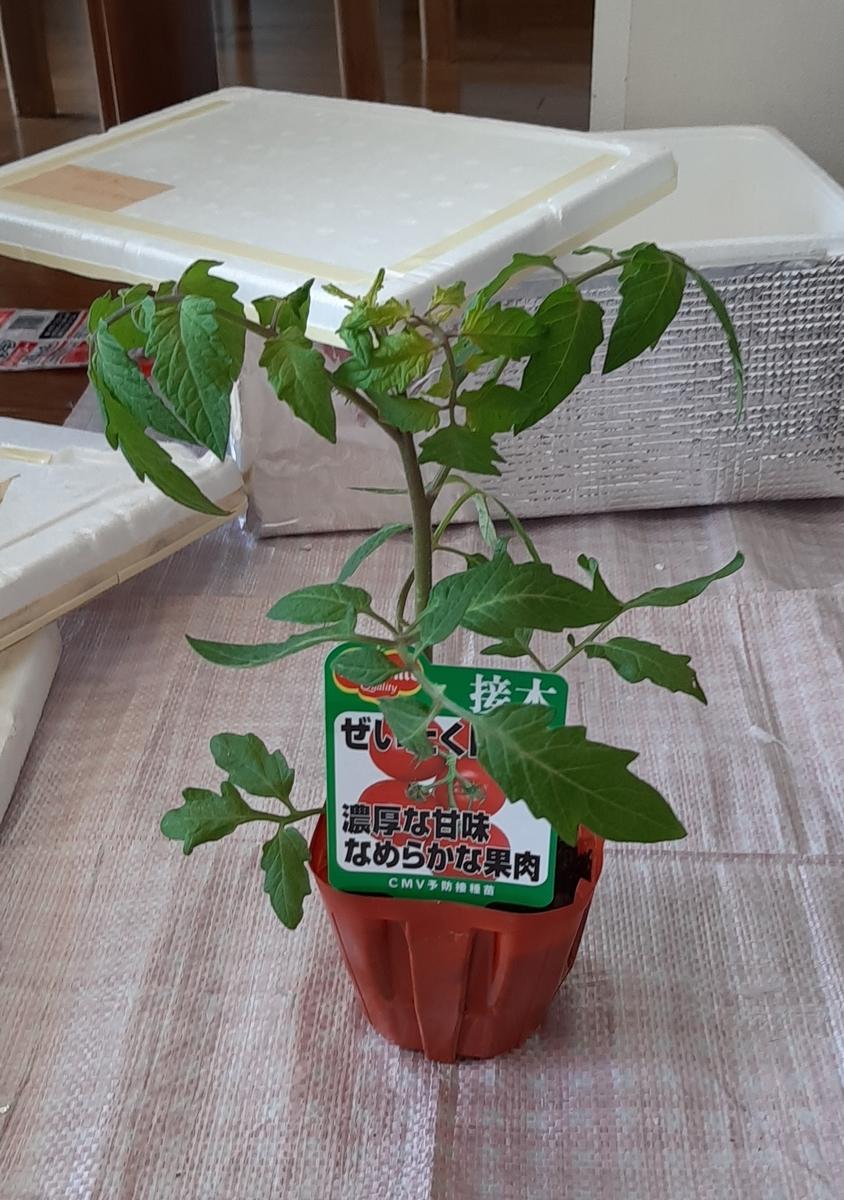 f:id:tomatotopan:20210411122921j:plain