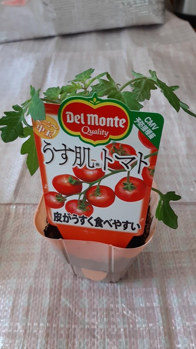 f:id:tomatotopan:20210411202337j:plain